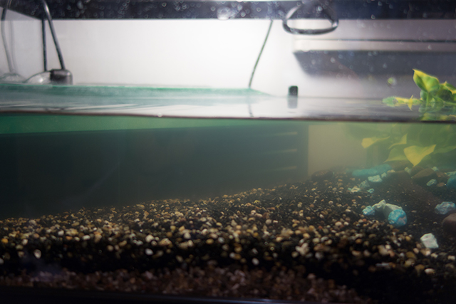 masse de charbon + pompe interne Aqua003